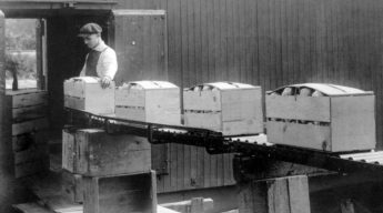 Man Loading Four Crates Very Full Of Fruit on Moving Belt in Black and White Image