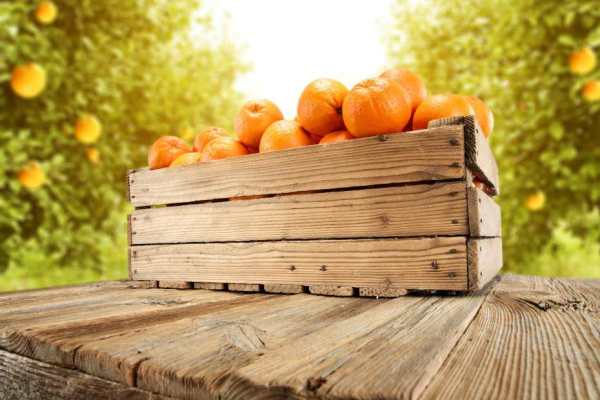 A crate of oranges on a table in an orchard.