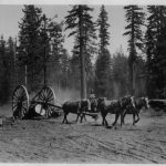 Team of Work Horses Pulling a Piece of Machinery in the Woods With Two Large Wheels in Black and White