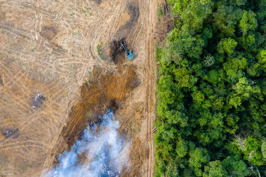 Deforestation Seen From Aerial View Looks Like a Desert