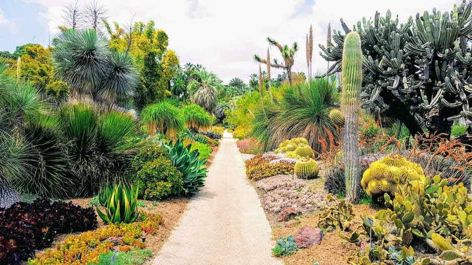 A beautiful walkway surrounded by cacti