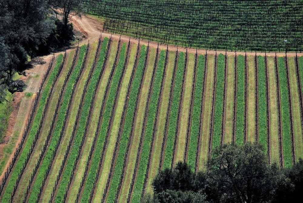california-crops