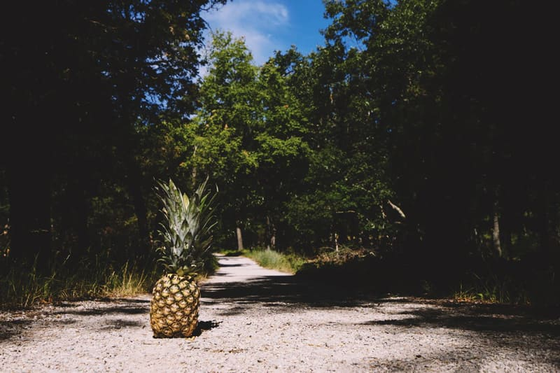 A pineapple sitting on a pathway in a forest