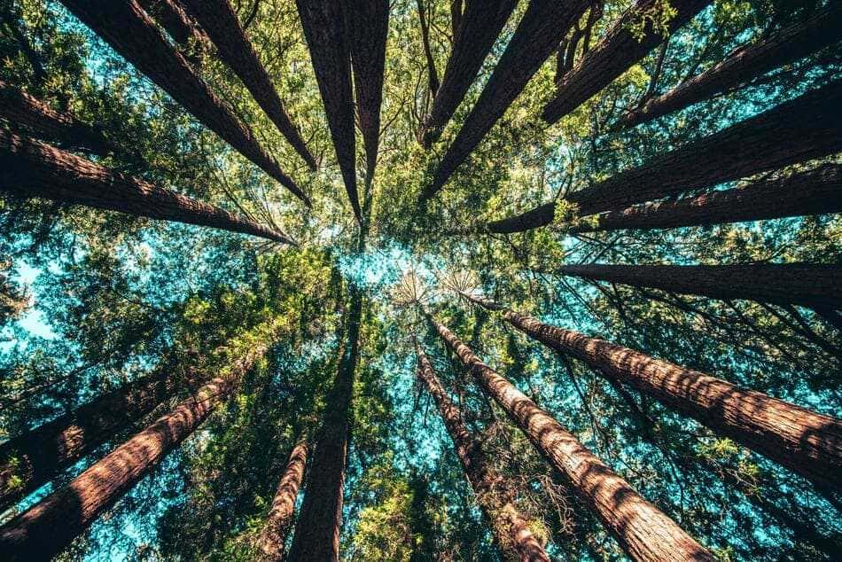 A low-angle photo of trees in a forest