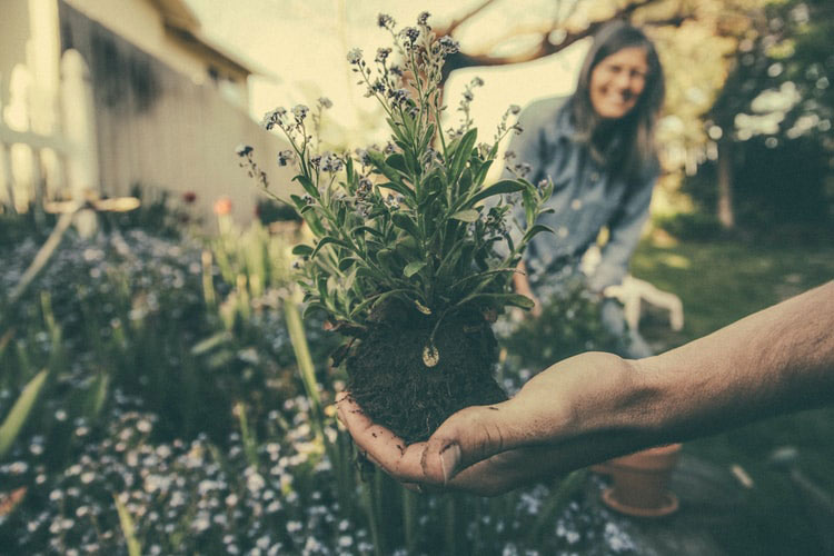 Hand holding plant in soil with woman