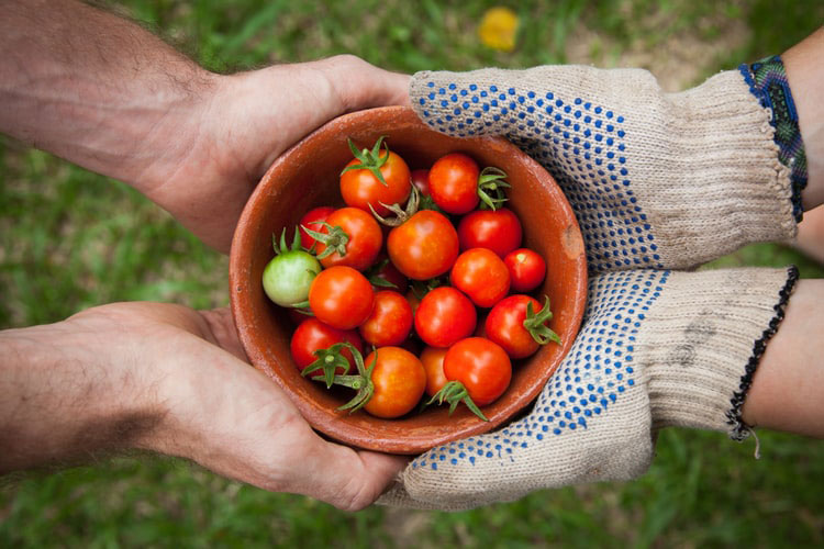 Two pairs of hands sharing bowl of tomatoes
