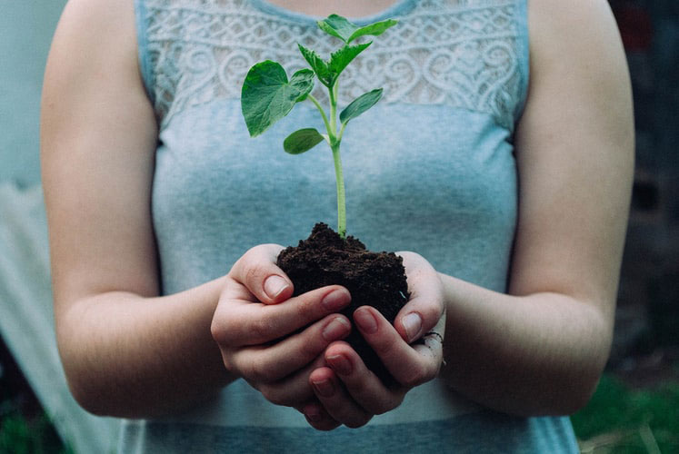 Woman holding soil with seedling
