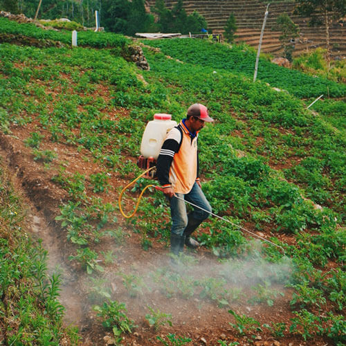 Worker spraying crops with pesticides