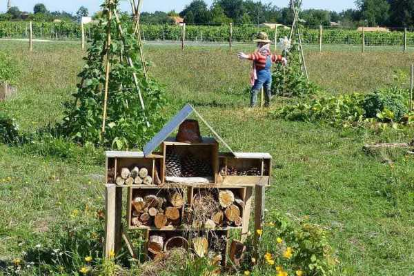 A grassy field with an insect hotel, scarecrow, and trellised vines
