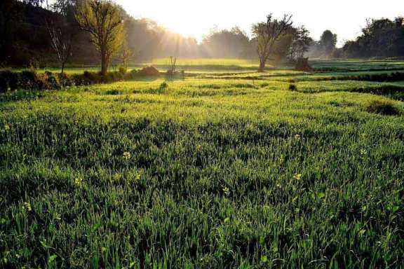 A grassy sustainable farming landscape at sunrise.